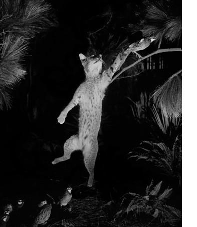 "David Billet & Ian Kline, ""Cat"", 2017, archival pigment print 14 x 11 inches"